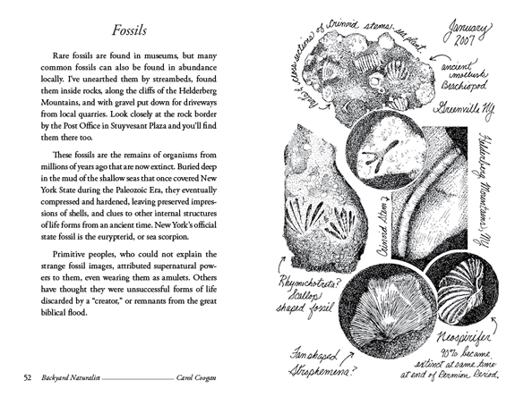 Fossils - Backyard Naturalist - Carol Coogan