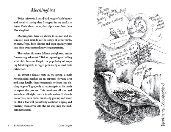 Mocking Bird - Backyard Naturalist - Carol Coogan