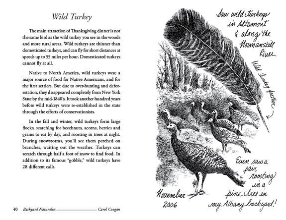 Wild Turkey - Backyard Naturalist - Carol Coogan